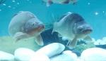 Nenechte si ujít obří prosklené akvárium na veletrhu FOR FISHING