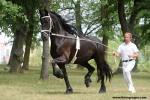 Doprovodný program FOR HORSE - Aréna Hala 5