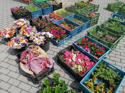 Letní farmářské trhy