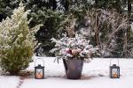 Vyhlášení 1. ročníku soutěže Zahrada v zimě