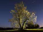 Neváhejte, a ještě do konce měsíce podpořte český strom - Lípu na Lipce v celoevropské soutěži Evropský strom roku 2017
