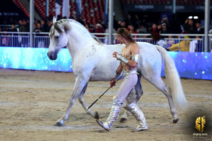 Program FOR HORSE SHOW