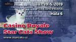 Zveme Vás na Mezinárodní výstavu koček