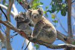 Přijďte si poslechnout povídání Petra Musílka o třech tvářích Austrálie